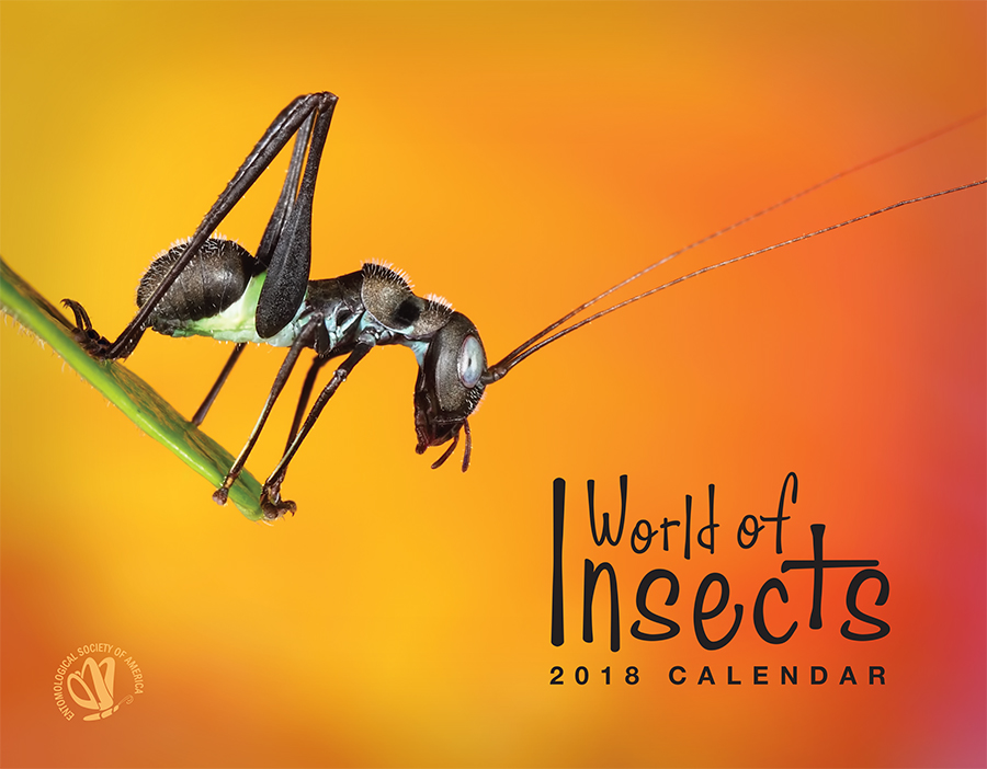 2018 World of Insects Calendar