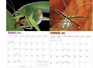 World of Insects Calendar