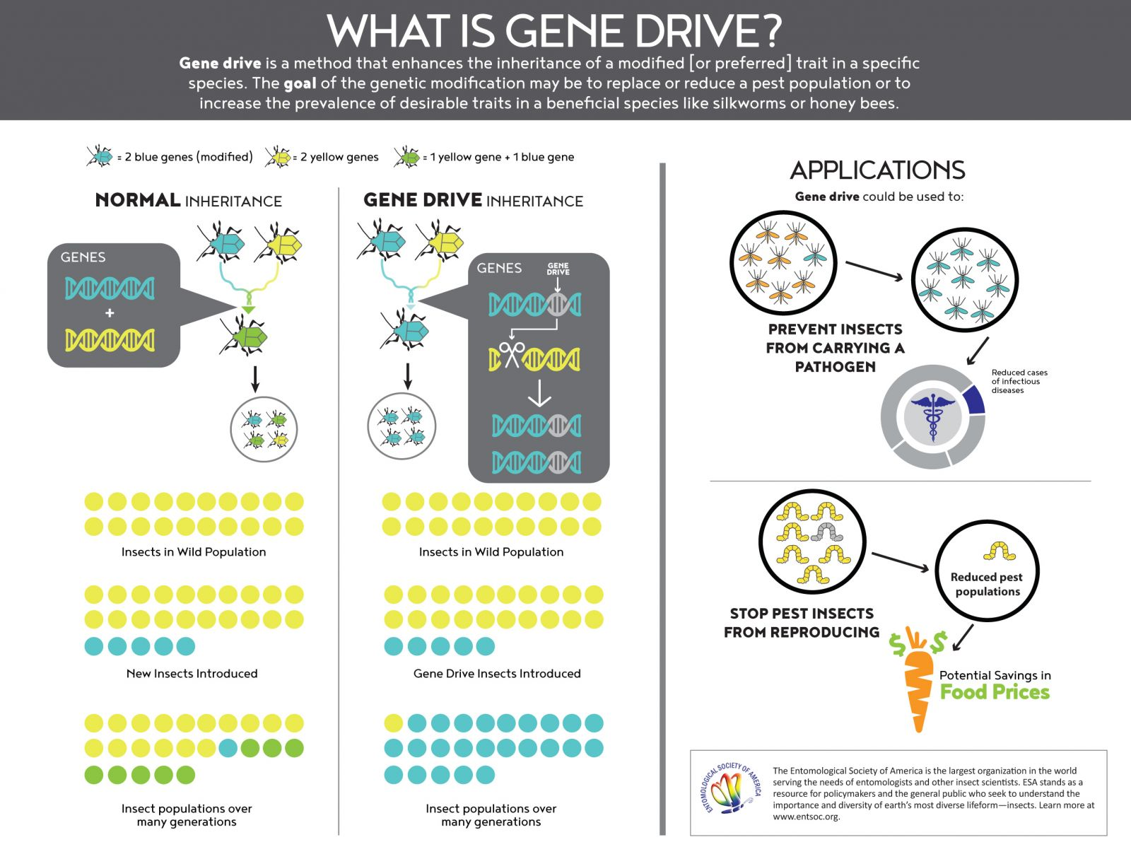 what is gene drive